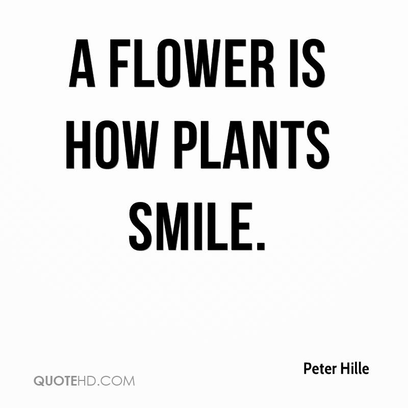 peter hille quotes quotehd