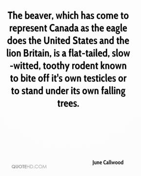 June Callwood  - The beaver, which has come to represent Canada as the eagle does the United States and the lion Britain, is a flat-tailed, slow-witted, toothy rodent known to bite off it's own testicles or to stand under its own falling trees.