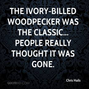 Chris Hails - The ivory-billed woodpecker was the classic... people really thought it was gone.