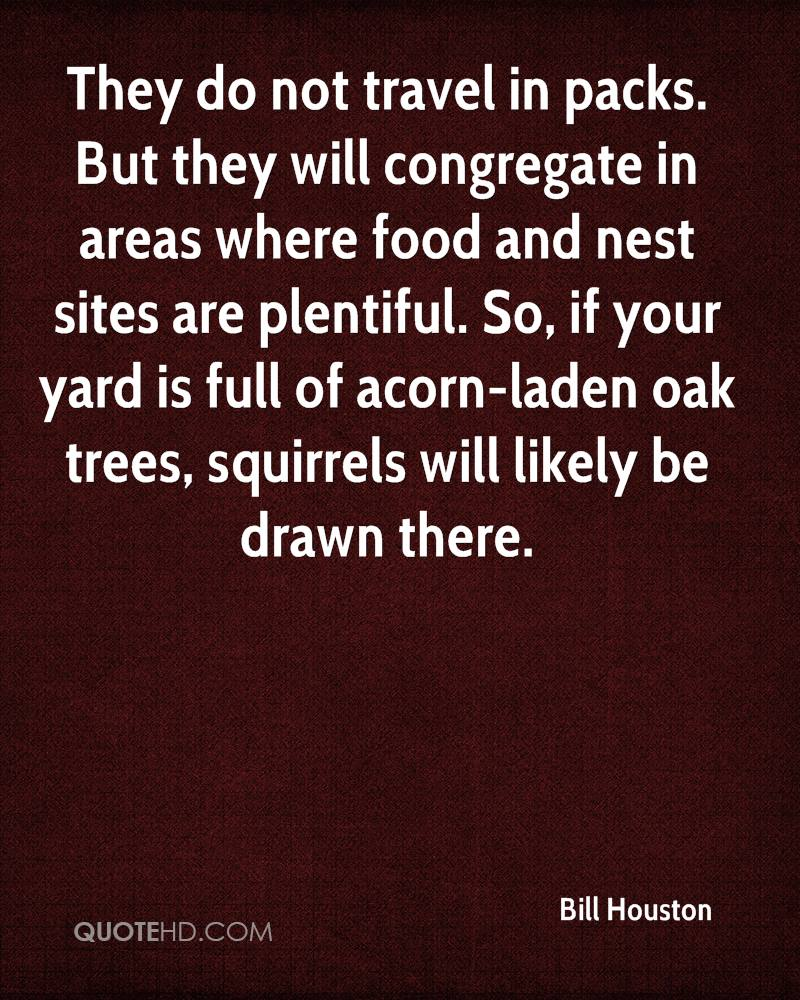 They do not travel in packs. But they will congregate in areas where food and nest sites are plentiful. So, if your yard is full of acorn-laden oak trees, squirrels will likely be drawn there.