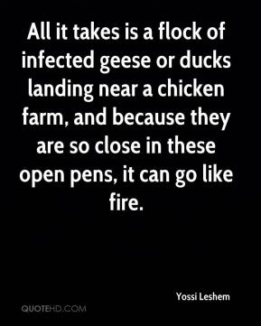 Yossi Leshem  - All it takes is a flock of infected geese or ducks landing near a chicken farm, and because they are so close in these open pens, it can go like fire.
