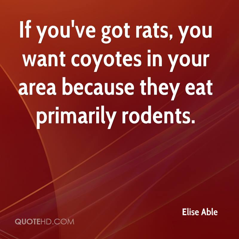If you've got rats, you want coyotes in your area because they eat primarily rodents.