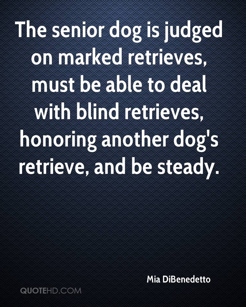 The senior dog is judged on marked retrieves, must be able to deal with blind retrieves, honoring another dog's retrieve, and be steady.