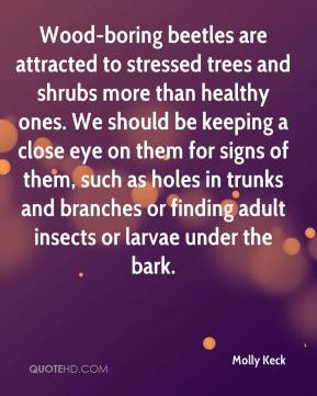 Molly Keck  - Wood-boring beetles are attracted to stressed trees and shrubs more than healthy ones. We should be keeping a close eye on them for signs of them, such as holes in trunks and branches or finding adult insects or larvae under the bark.