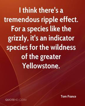 Tom France  - I think there's a tremendous ripple effect. For a species like the grizzly, it's an indicator species for the wildness of the greater Yellowstone.