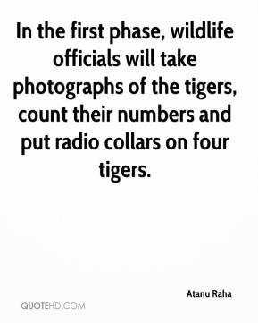 Atanu Raha - In the first phase, wildlife officials will take photographs of the tigers, count their numbers and put radio collars on four tigers.