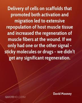 Delivery of cells on scaffolds that promoted both activation and migration led to extensive repopulation of host muscle tissue and increased the regeneration of muscle fibers at the wound. If we only had one or the other signal - sticky molecules or drugs - we didn't get any significant regeneration.