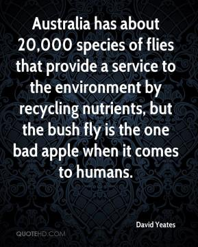 David Yeates - Australia has about 20,000 species of flies that provide a service to the environment by recycling nutrients, but the bush fly is the one bad apple when it comes to humans.
