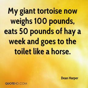 Dean Harper - My giant tortoise now weighs 100 pounds, eats 50 pounds of hay a week and goes to the toilet like a horse.