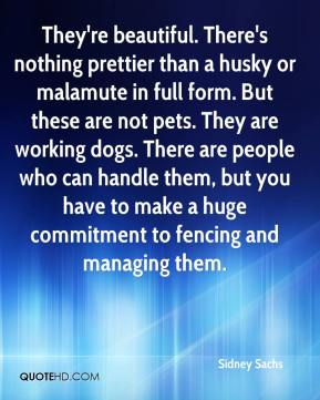 Sidney Sachs  - They're beautiful. There's nothing prettier than a husky or malamute in full form. But these are not pets. They are working dogs. There are people who can handle them, but you have to make a huge commitment to fencing and managing them.