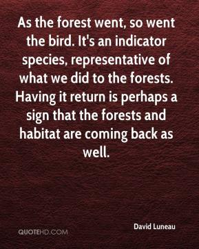 David Luneau - As the forest went, so went the bird. It's an indicator species, representative of what we did to the forests. Having it return is perhaps a sign that the forests and habitat are coming back as well.