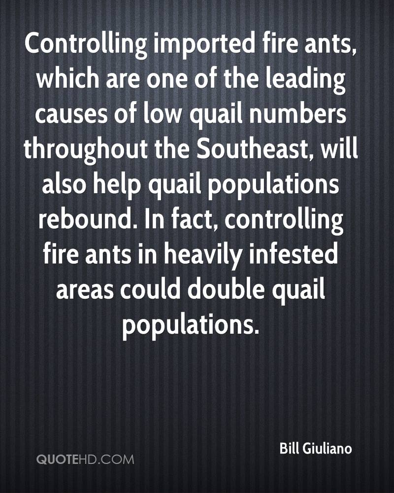 Controlling imported fire ants, which are one of the leading causes of low quail numbers throughout the Southeast, will also help quail populations rebound. In fact, controlling fire ants in heavily infested areas could double quail populations.