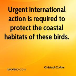 Christoph Zockler - Urgent international action is required to protect the coastal habitats of these birds.