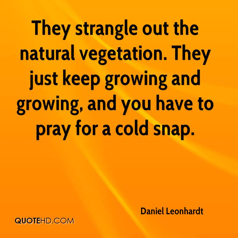 They strangle out the natural vegetation. They just keep growing and growing, and you have to pray for a cold snap.