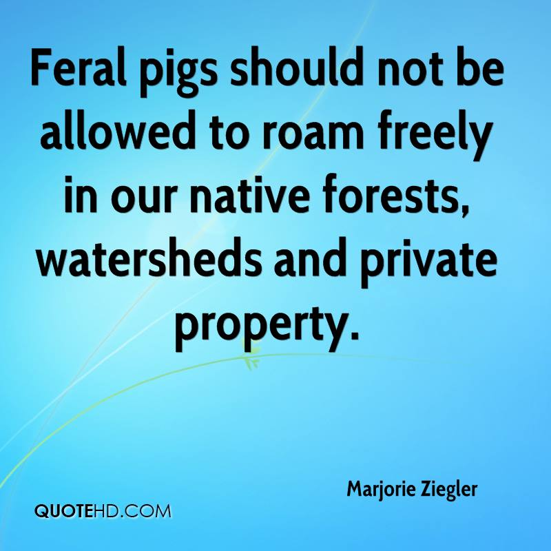 Feral pigs should not be allowed to roam freely in our native forests, watersheds and private property.