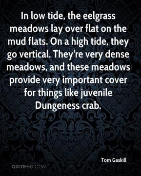 Tom Gaskill  - In low tide, the eelgrass meadows lay over flat on the mud flats. On a high tide, they go vertical. They're very dense meadows, and these meadows provide very important cover for things like juvenile Dungeness crab.