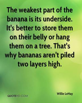 Willie LeHay  - The weakest part of the banana is its underside. It's better to store them on their belly or hang them on a tree. That's why bananas aren't piled two layers high.