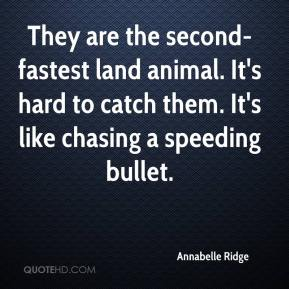 Annabelle Ridge - They are the second-fastest land animal. It's hard to catch them. It's like chasing a speeding bullet.