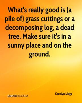 What's really good is (a pile of) grass cuttings or a decomposing log, a dead tree. Make sure it's in a sunny place and on the ground.