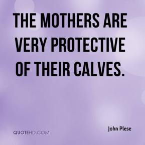 John Plese  - The mothers are very protective of their calves.