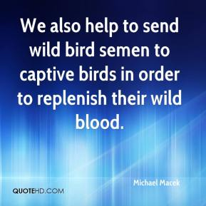Michael Macek  - We also help to send wild bird semen to captive birds in order to replenish their wild blood.