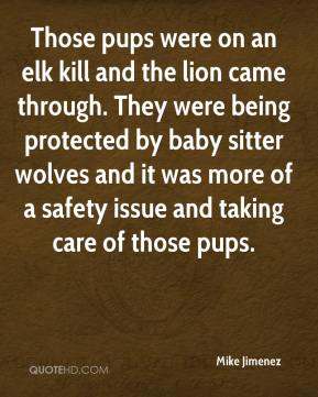 Mike Jimenez  - Those pups were on an elk kill and the lion came through. They were being protected by baby sitter wolves and it was more of a safety issue and taking care of those pups.