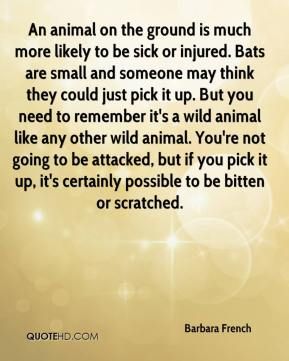 Barbara French - An animal on the ground is much more likely to be sick or injured. Bats are small and someone may think they could just pick it up. But you need to remember it's a wild animal like any other wild animal. You're not going to be attacked, but if you pick it up, it's certainly possible to be bitten or scratched.