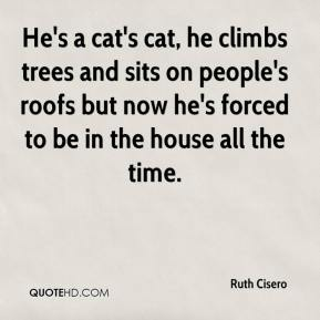 Ruth Cisero  - He's a cat's cat, he climbs trees and sits on people's roofs but now he's forced to be in the house all the time.