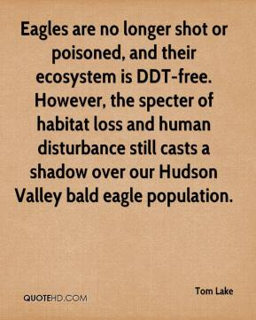 Tom Lake  - Eagles are no longer shot or poisoned, and their ecosystem is DDT-free. However, the specter of habitat loss and human disturbance still casts a shadow over our Hudson Valley bald eagle population.