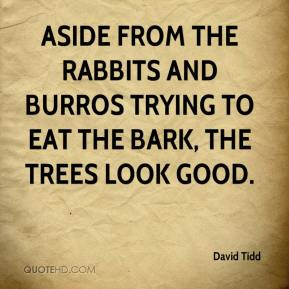 David Tidd - Aside from the rabbits and burros trying to eat the bark, the trees look good.