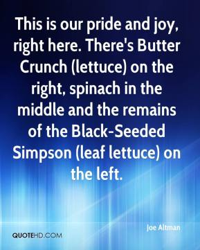Joe Altman  - This is our pride and joy, right here. There's Butter Crunch (lettuce) on the right, spinach in the middle and the remains of the Black-Seeded Simpson (leaf lettuce) on the left.
