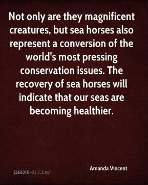 Not only are they magnificent creatures, but sea horses also represent a conversion of the world's most pressing conservation issues. The recovery of sea horses will indicate that our seas are becoming healthier.