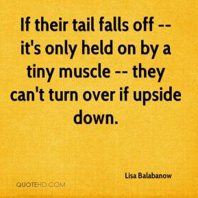 Lisa Balabanow  - If their tail falls off -- it's only held on by a tiny muscle -- they can't turn over if upside down.