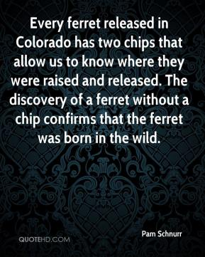 Pam Schnurr  - Every ferret released in Colorado has two chips that allow us to know where they were raised and released. The discovery of a ferret without a chip confirms that the ferret was born in the wild.
