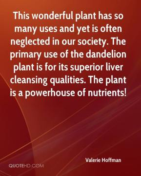 Valerie Hoffman  - This wonderful plant has so many uses and yet is often neglected in our society. The primary use of the dandelion plant is for its superior liver cleansing qualities. The plant is a powerhouse of nutrients!
