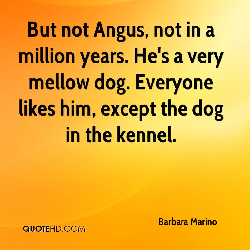 But not Angus, not in a million years. He's a very mellow dog. Everyone likes him, except the dog in the kennel.