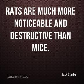 Jack Clarke - Rats are much more noticeable and destructive than mice.