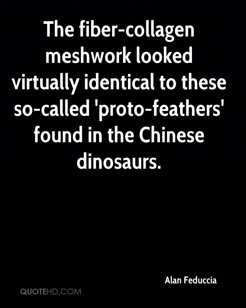 The fiber-collagen meshwork looked virtually identical to these so-called 'proto-feathers' found in the Chinese dinosaurs.