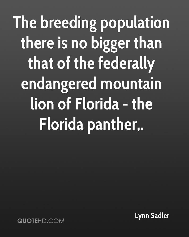 The breeding population there is no bigger than that of the federally endangered mountain lion of Florida - the Florida panther.