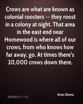 Brian Shema - Crows are what are known as colonial roosters -- they roost in a colony at night. That area in the east end near Homewood is where all of our crows, from who knows how far away, go. At times there's 20,000 crows down there.