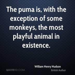 William Henry Hudson - The puma is, with the exception of some monkeys, the most playful animal in existence.