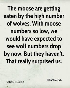 John Vucetich  - The moose are getting eaten by the high number of wolves. With moose numbers so low, we would have expected to see wolf numbers drop by now. But they haven't. That really surprised us.