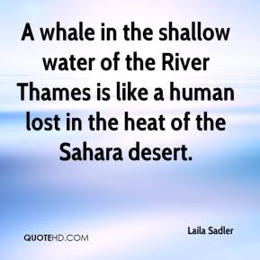 Laila Sadler  - A whale in the shallow water of the River Thames is like a human lost in the heat of the Sahara desert.