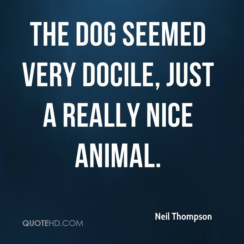The dog seemed very docile, just a really nice animal.