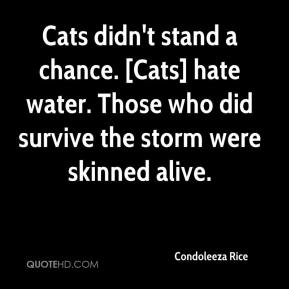 Condoleeza Rice - Cats didn't stand a chance. [Cats] hate water. Those who did survive the storm were skinned alive.