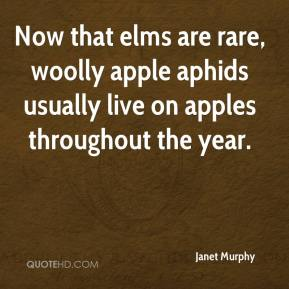 Now that elms are rare, woolly apple aphids usually live on apples throughout the year.
