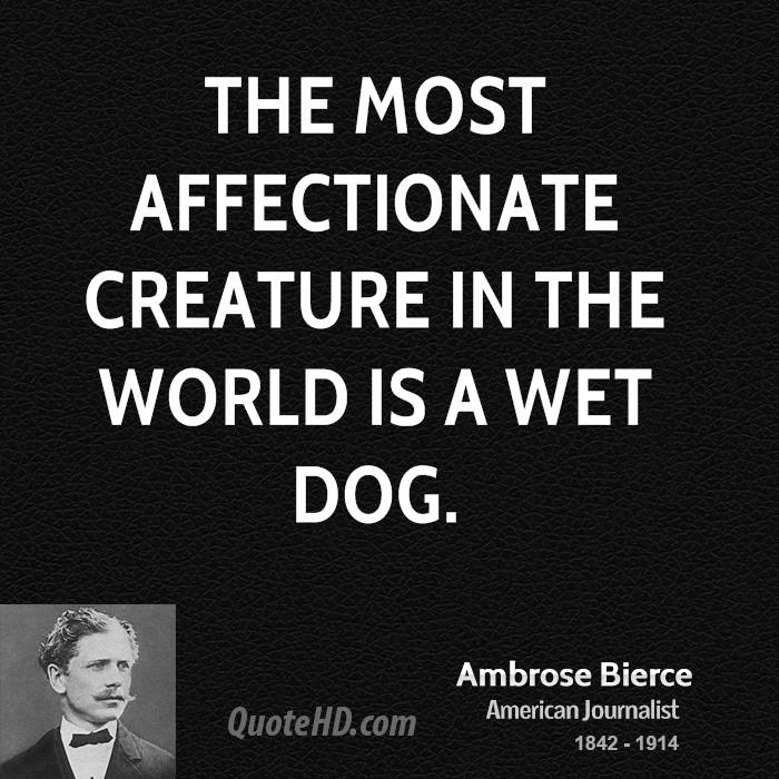 The most affectionate creature in the world is a wet dog.