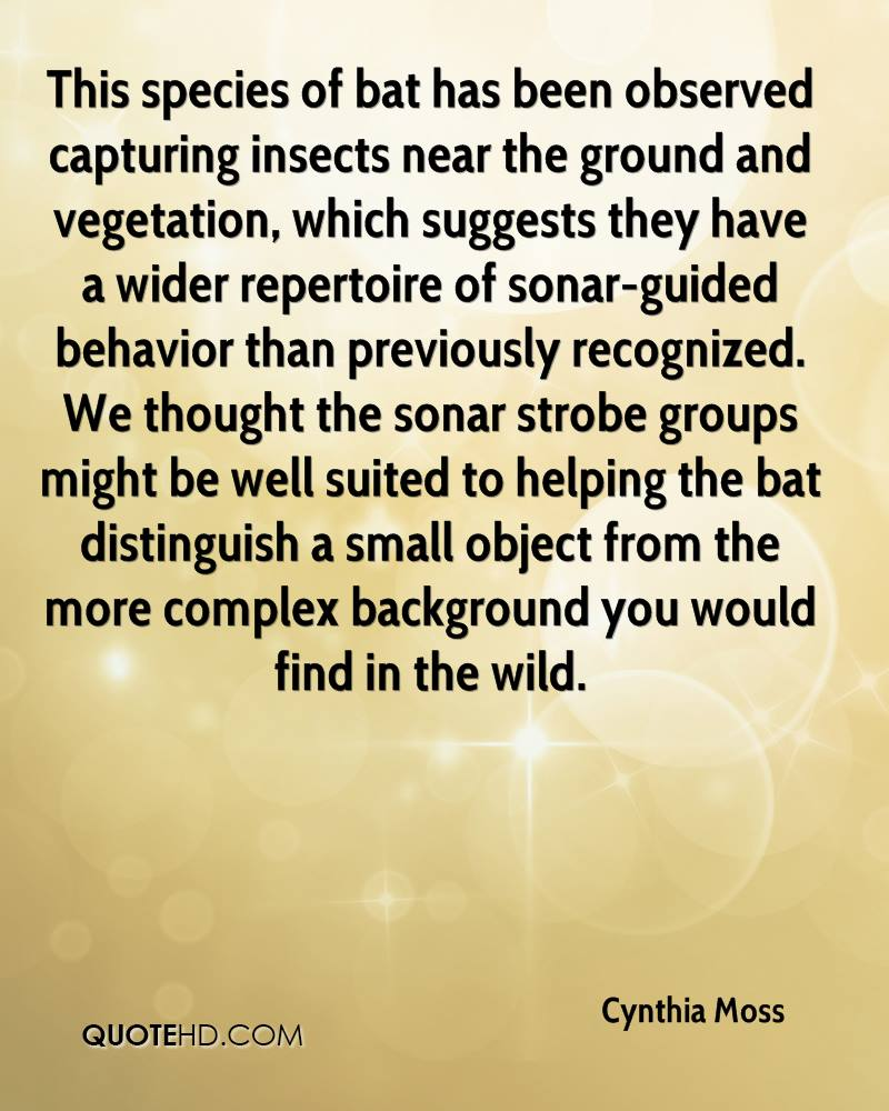 This species of bat has been observed capturing insects near the ground and vegetation, which suggests they have a wider repertoire of sonar-guided behavior than previously recognized. We thought the sonar strobe groups might be well suited to helping the bat distinguish a small object from the more complex background you would find in the wild.