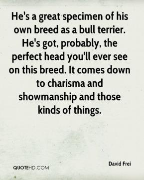 David Frei - He's a great specimen of his own breed as a bull terrier. He's got, probably, the perfect head you'll ever see on this breed. It comes down to charisma and showmanship and those kinds of things.