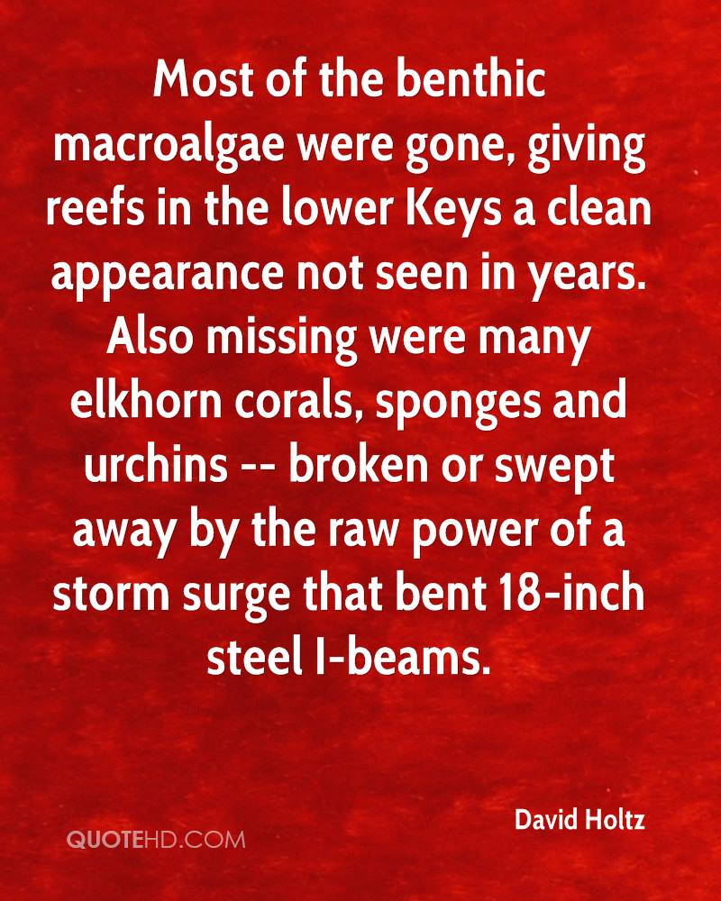 Most of the benthic macroalgae were gone, giving reefs in the lower Keys a clean appearance not seen in years. Also missing were many elkhorn corals, sponges and urchins -- broken or swept away by the raw power of a storm surge that bent 18-inch steel I-beams.